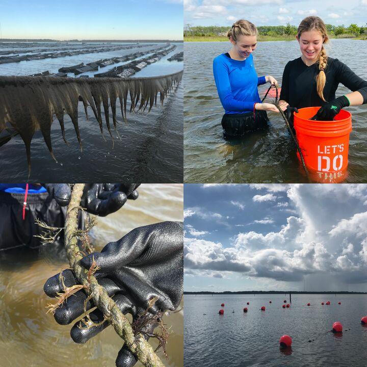 Phyta - Sustainable Seaweed